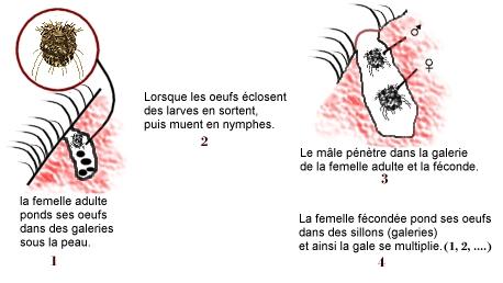 Les parasites dans la perche séchée
